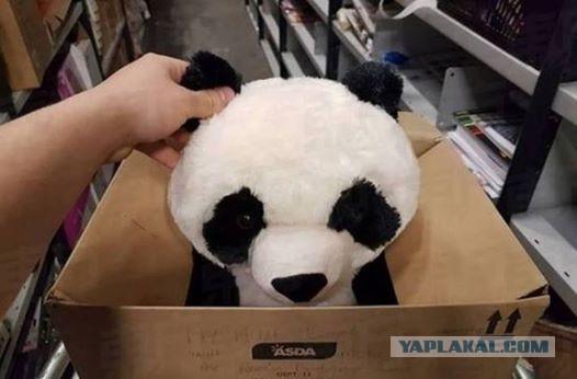 Порно с плюшевой пандой