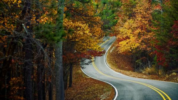 лесная осенняя дорога загрузить
