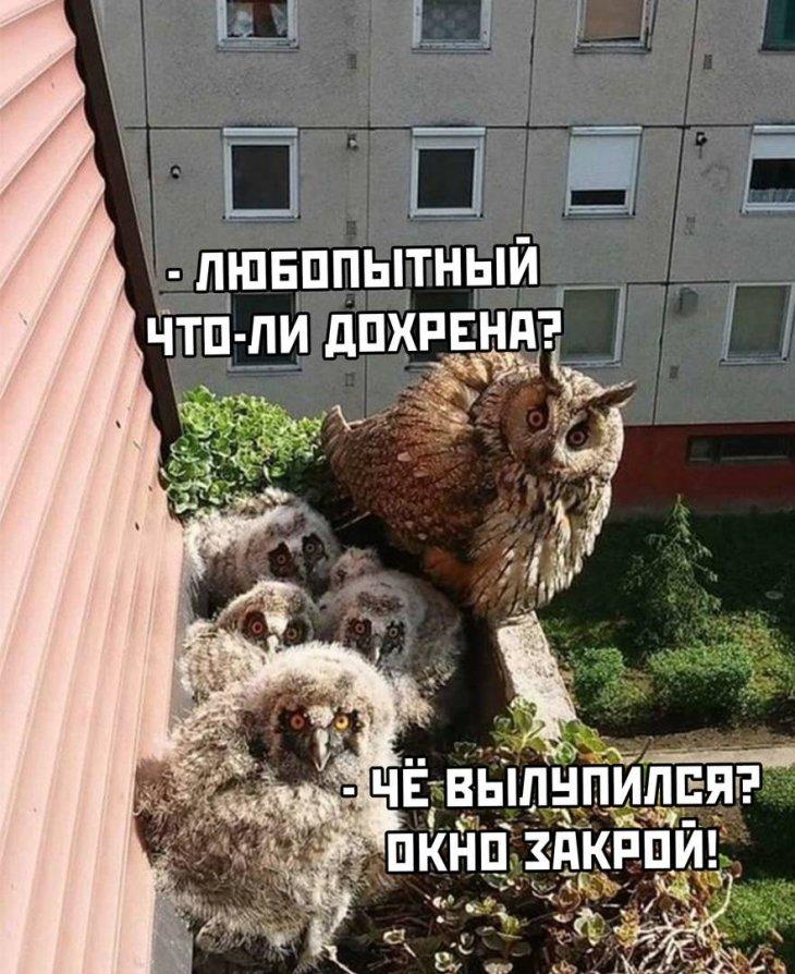 https://s00.yaplakal.com/pics/pics_original/9/9/8/13974899.jpg