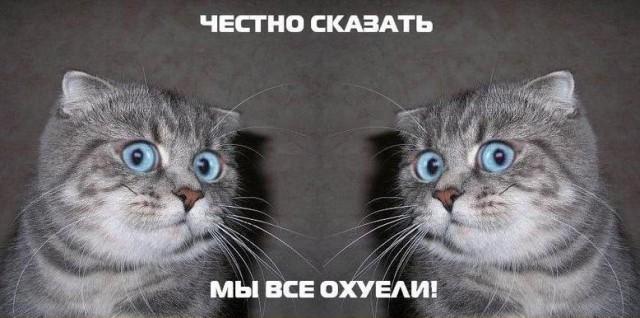 Честно сказать я в аухе кот картинка