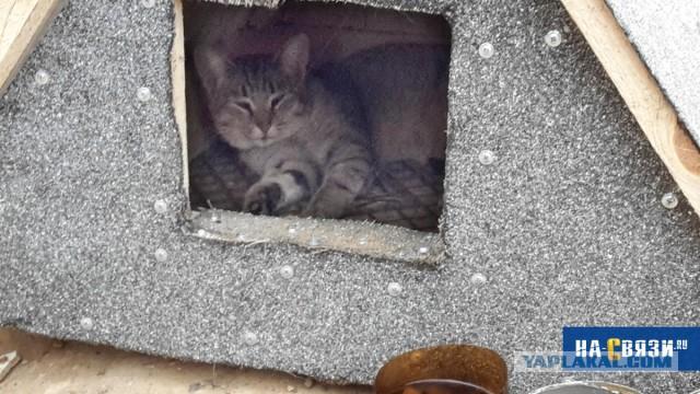 """Заботливые чебоксарцы поставили """"будку"""" для бездомного кота"""