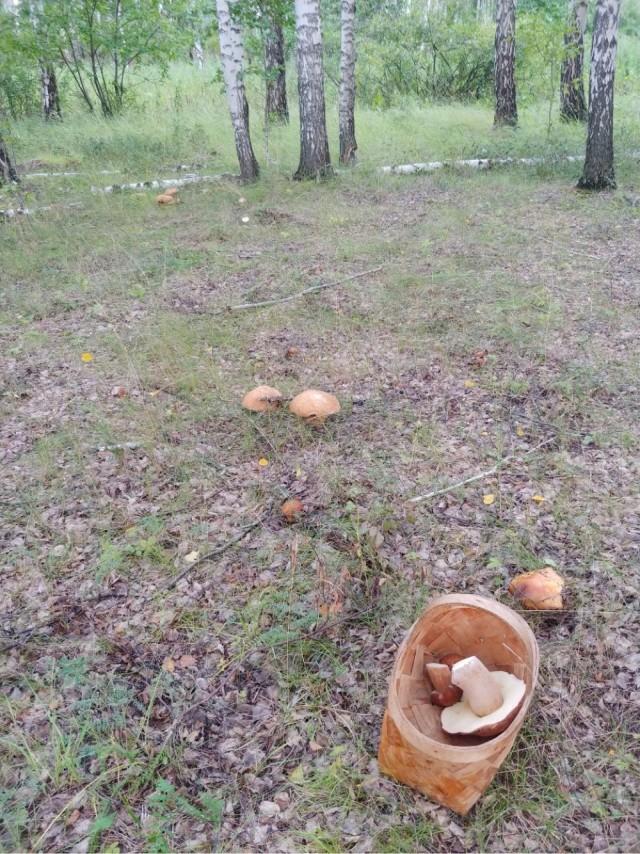 Хороший год для грибов на урале 2020