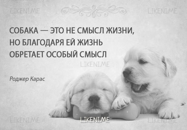 Пдд, картинки с надписью купи собаку