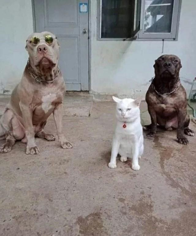 Кот, который был воспитан собаками