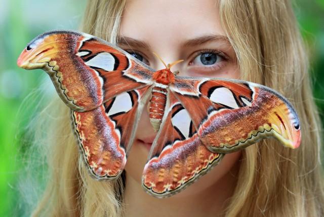 Картинки с приколом бабочки