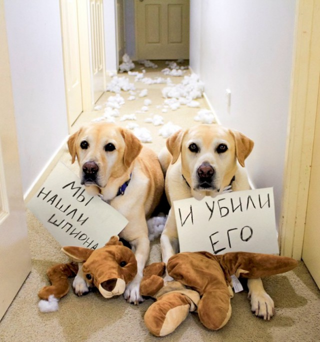 17 собак, которые больше так не будут. Наверное...