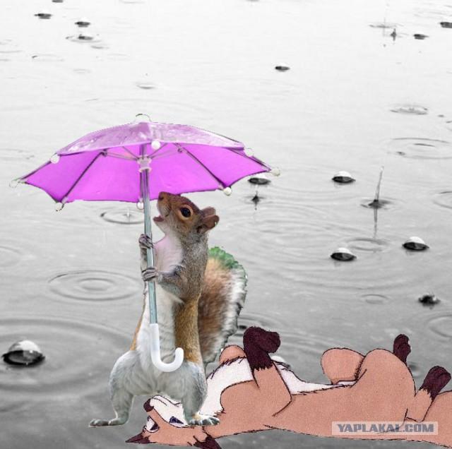 борисович, прикольные анимационные открытки с плохой погодой планирует возвращаться образу