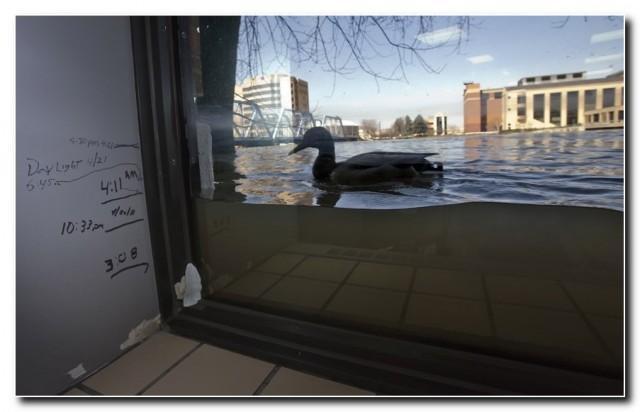 А в Мичигане чуть-чуть наводнение...