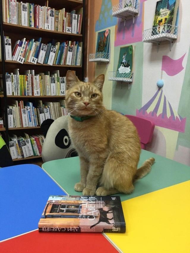 В Тверской области от рук живодера погиб кот-библиотекарь