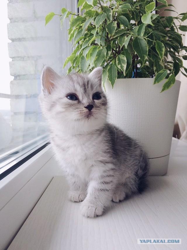 Фотографии кошек с котятами часто сталкиваемся