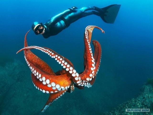 Волшебство океана (13 фот)
