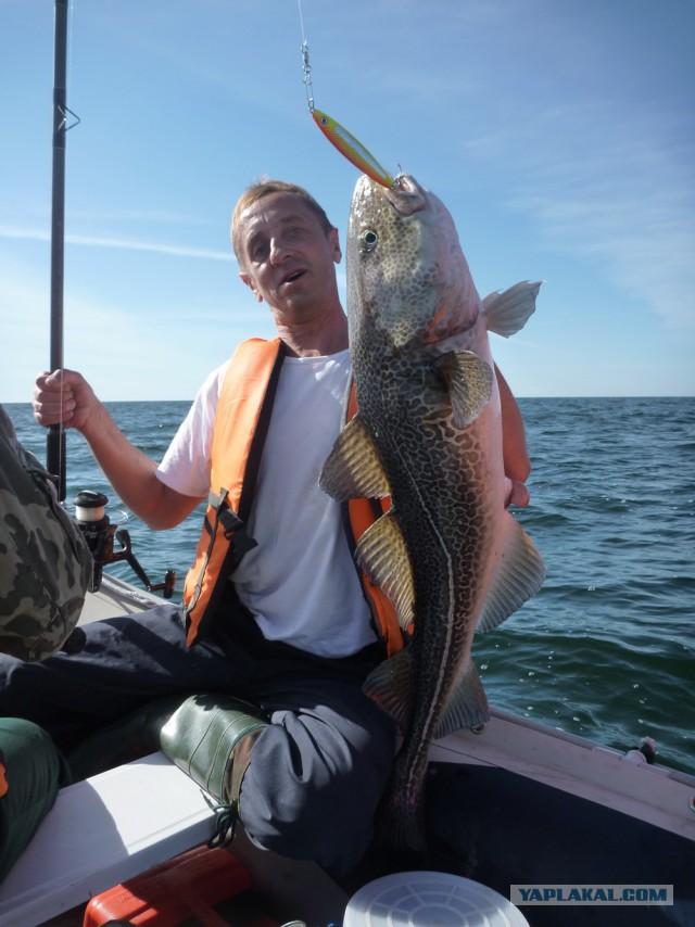 Ловля трески на Белом море