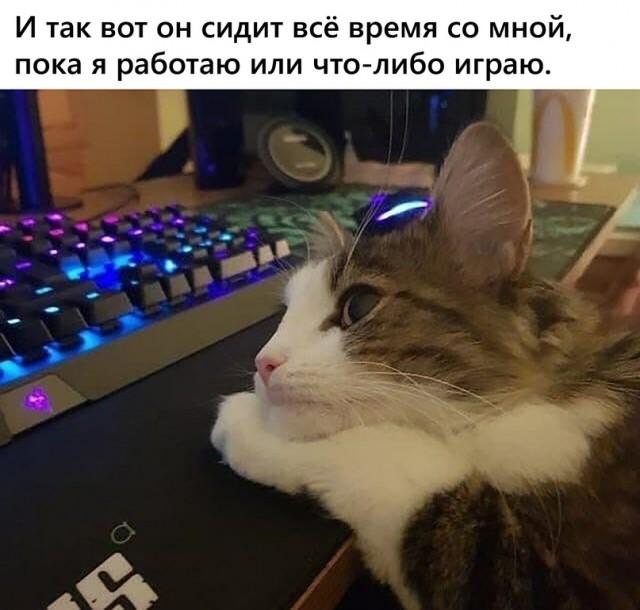 15853985.jpg