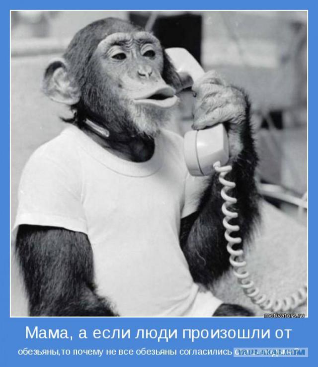 Смешные картинки про телефонные разговоры, открытки новым