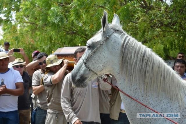 Конь пришел на похороны любимого хозяина