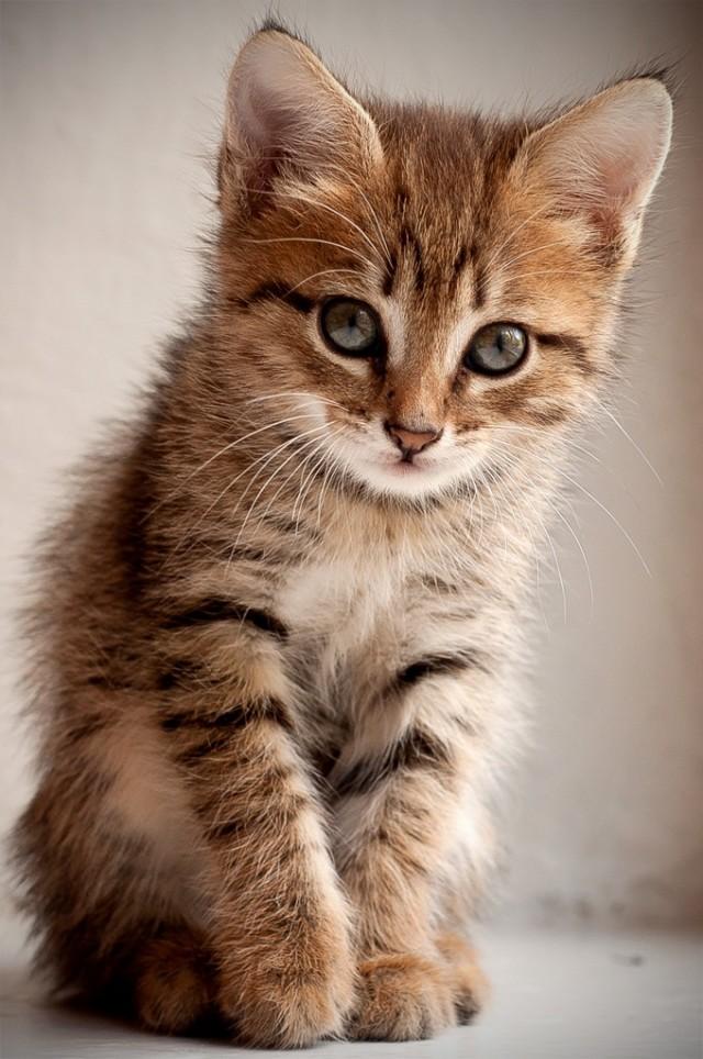 вооружившись сидящий котенок картинки сочетание разнообразных