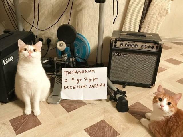 Чистосердечные признания и объяснительные нашкодивших котеек