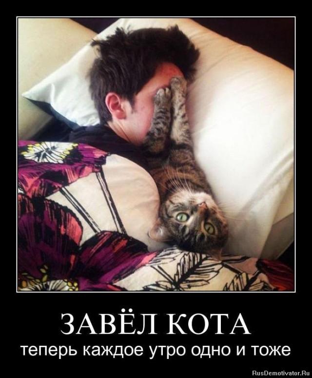 картинка завести кота ачуево