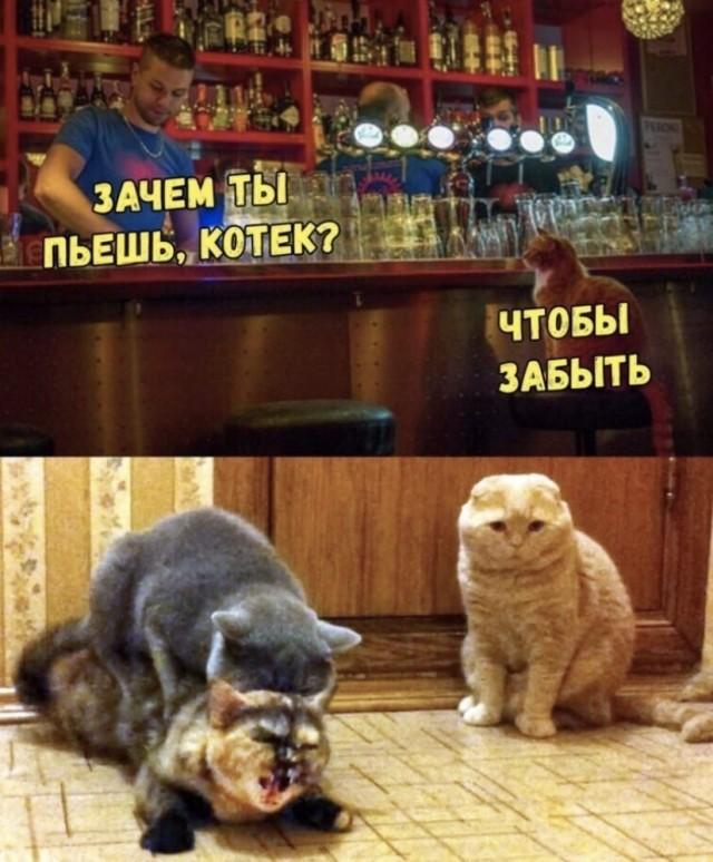 Алкокартинки на пятницу