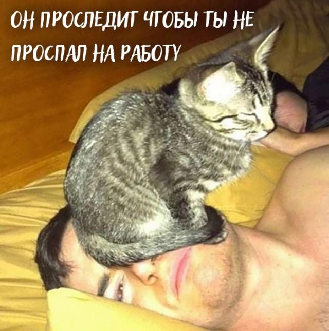 Девять причин, почему вам срочно надо завести кота