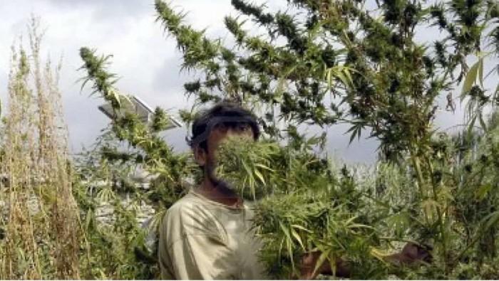 Узбеков конопля у марихуана пятка