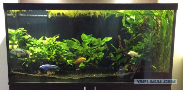 Рыбкам воду поменяли