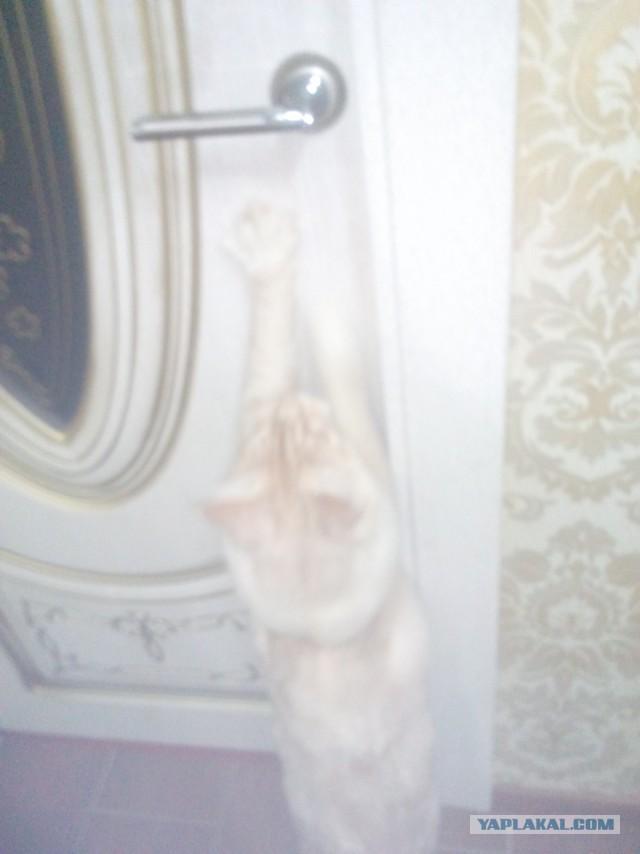 ЯП-конкурс: Замерь кота
