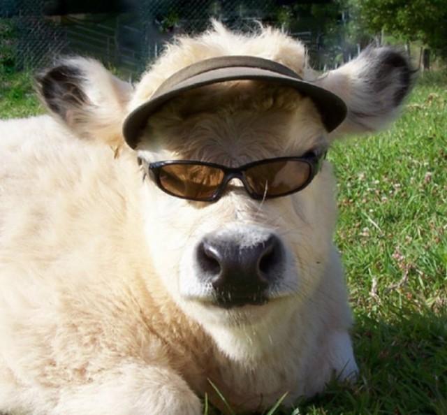 фото приколы смешные бычки