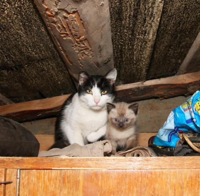 выбором котята в деревне фото знакомство любой